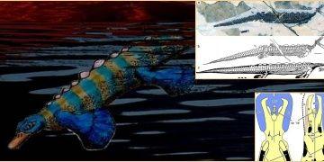 Ornitorenkin atası olduğu sanılan gagalı hayvan fosili bulundu