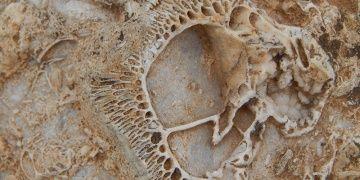 Konyalı vatandaş Geyik Dağlarında fosil yatağı buldu