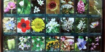 Tıbbi Aromatik Bitkiler Müzesinde 280 tıbbi ve aromatik bitki türü