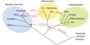 They say DNA suggests Neanderthal and Denisovan populations interbred