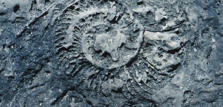 Kanada'da eriyen buzulların altından 40 bin yıllık fosiller çıktı