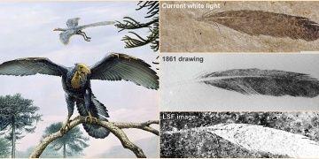 Paleontologlar dinozor tüyü için 150 yıl sonra pardon dediler.