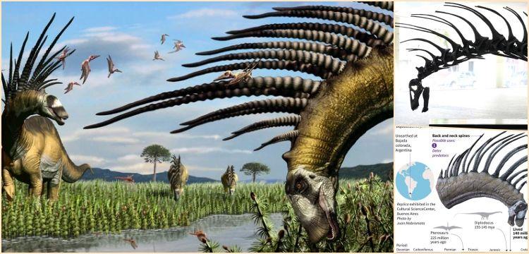 Dikenli dinozor Bajadasaurus pronuspinax'in boynu müzede sergileniyor