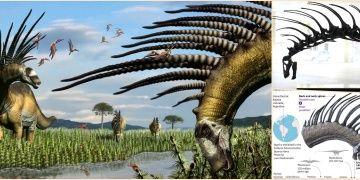 Dikenli dinozor Bajadasaurus pronuspinaxin boynu müzede sergileniyor