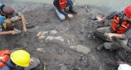 20 milyon yıllık 15 metre uzunluğunda deniz ineği fosili bulundu