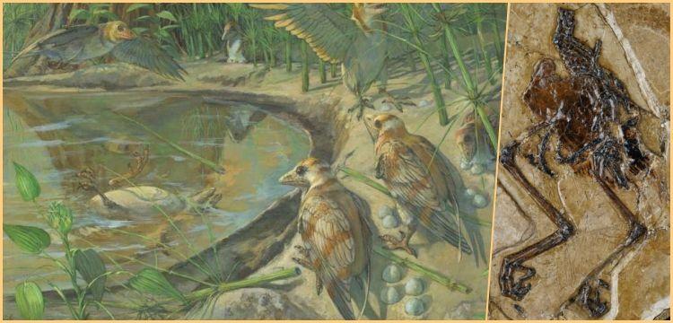 Çin'de yumurtasıyla fosilleşmiş 110 milyon yıllık kuş bulundu