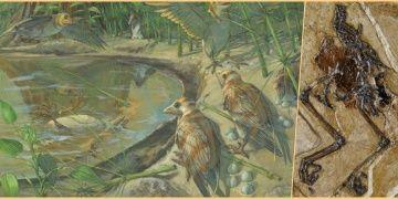 Çinde yumurtasıyla fosilleşmiş 110 milyon yıllık kuş bulundu