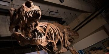 Fossil of biggest Tyrannosaurus rex found in Canada
