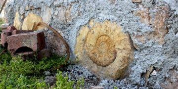 65 milyon yıllık dev salyangoz fosili duvar taşı olarak kullanıldı