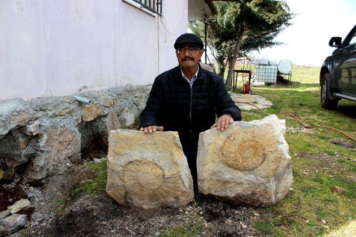 Adıyaman'da 65 milyon yıllık dev salyangoz fosili duvardan böyle söküldü