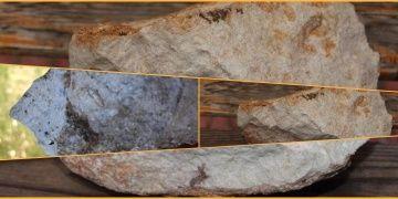 Cudi Dağında 12 milyon yıllık deniz canlısı fosili bulundu