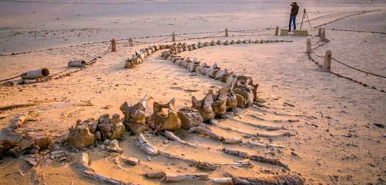 Mısır çöllerindeki Balina Vadisi adını 40 milyon yıllık fosillerden alıyor
