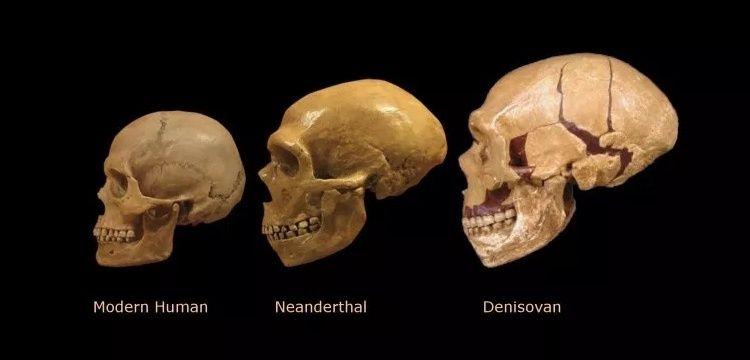 Altay İnsanı Denisovan'a ait ilk kafatası parçası bulundu
