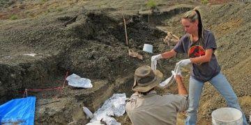 Dinozorları yok ettiği iddia edilen gök taşının parçası bulundu iddiası