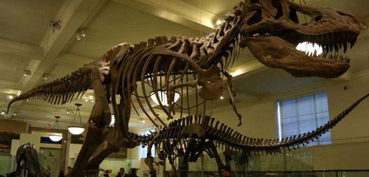 Fosil Avcısı, dinozor fosilini Ebay'de satışa çıkardı