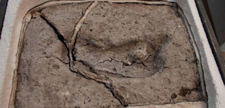 Amerika kıtasındaki en eski insan ayak izi bulundu