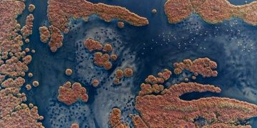 Gediz Deltasının sulak alan bütünlüğünü koruyacak karar