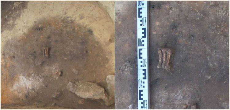 Polonya'da 4.500 yıllık mezardan bir adam, bir çocuk ve ayı pençesi çıktı