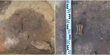 Polonyada 4.500 yıllık mezardan bir adam, bir çocuk ve ayı pençesi çıktı