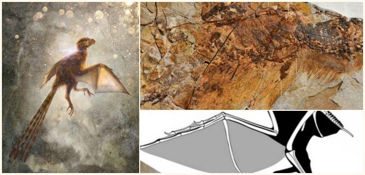 Çin'de 63 milyon yıllık yarasa kanatlı yeni bir dinozor türü keşfedildi