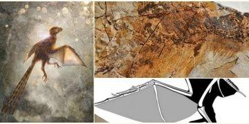 Çinde 63 milyon yıllık yarasa kanatlı yeni bir dinozor türü keşfedildi