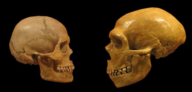 Neandertal ile Homo Sapiens'in ayrışma zamanına dair yeni varsayım