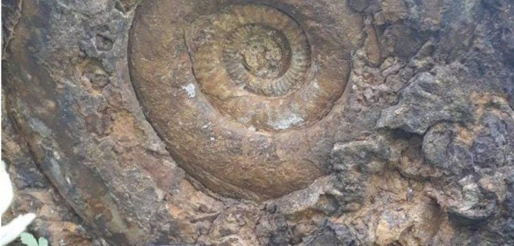 Bilecik'te  60 santim çapında 130 milyon yıllık Ammonit fosili bulundu