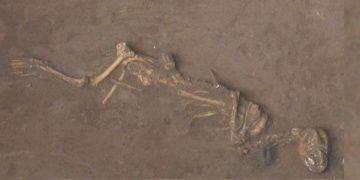 Çinde 3 bin yıl önce köpek yavruları canlı olarak gömülmüş