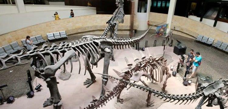 Tayland'da T-rex'in akrabası iki yeni dev dinozor türü keşfedildi