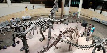 Taylandda T-rexin akrabası iki yeni dev dinozor türü keşfedildi