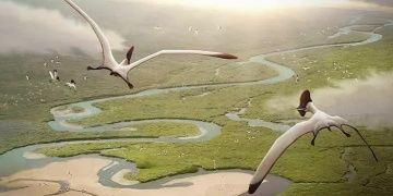 Pterozorlar doğar doğmaz uçabiliyormuş