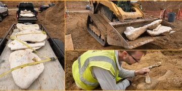 Huzurevi yapılmak istenen alandan tonlarca dinozor fosili çıkarıldı