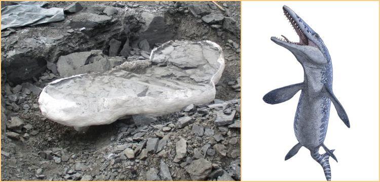 Kanada'da 70 milyon yıllık Mosazor fosili bulundu