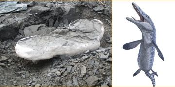 Canadian miners unearth 70-million-year-old Mosasaur fossil