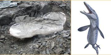 Kanadada 70 milyon yıllık Mosazor fosili bulundu