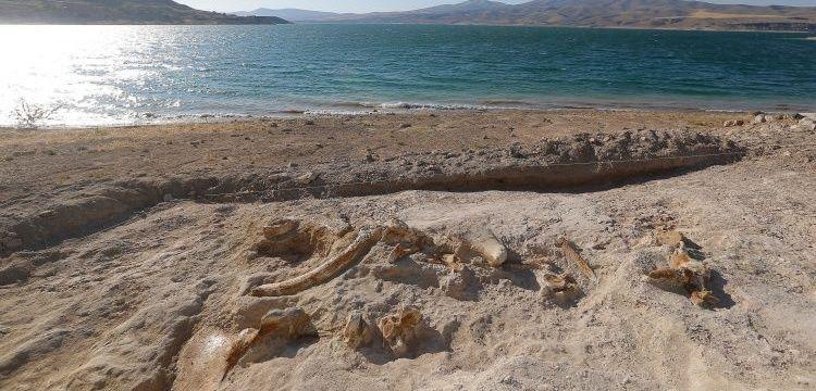 Kayseri'deki kazılarda 7,5 milyon yıllık zürafa fosili bulundu