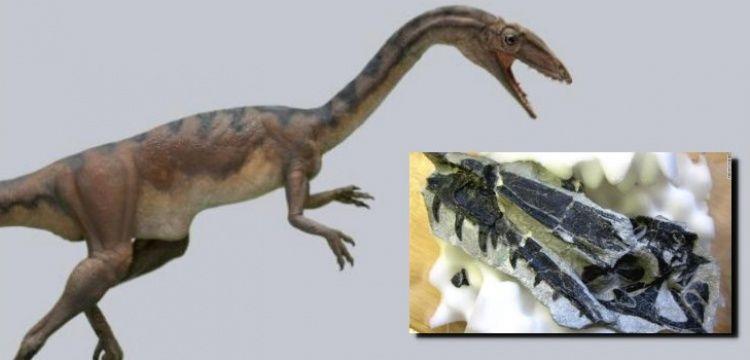 İsviçre'de bulunan fosiller yeni bir dinozor türüne ait çıktı