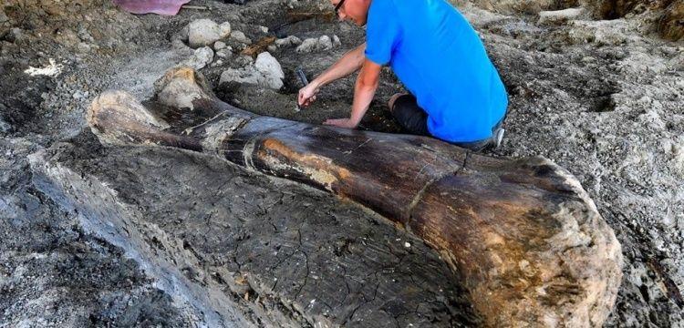 Fransa'da 2 metre boyunda 140 milyon yıllık dinozor kemiği bulundu