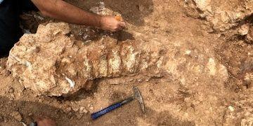 Kurutlu kurtarma kazılarında bulunan fosil sayısı 2 bine yaklaştı