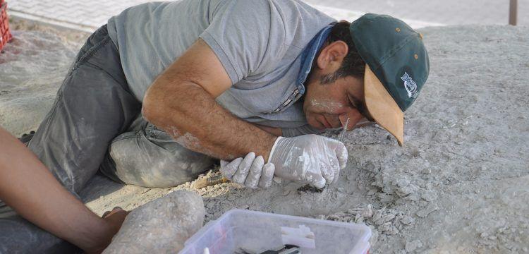 Nevşehir'de konut yapılırken fosil bulunan alandaki kazılar sürüyor