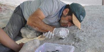 Nevşehirde konut yapılırken fosil bulunan alandaki kazılar sürüyor