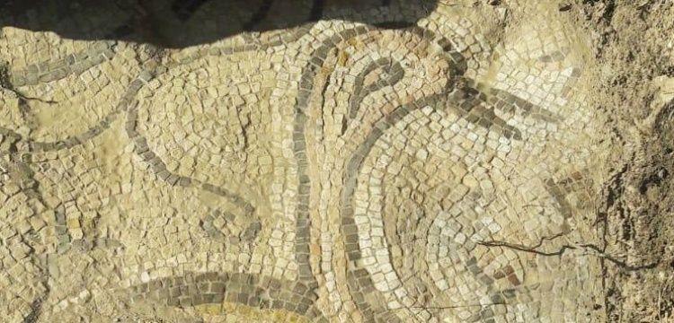 Besni'de bir tarlada Bizans döneminden kalma ördekli mozaik bulundu