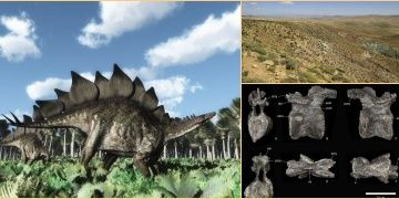 168 million years old stegosaurus fossil discovered in Morocco