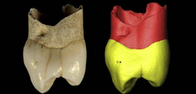 İran'da 20 yıl önce bulunan dişin Neandertal'e ait olduğu anlaşıldı