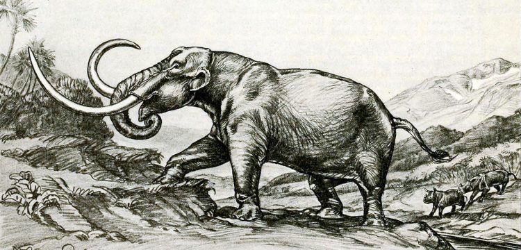 Kayseri'de 7,5 milyon yıllık fil fosili tek parça olarak bulundu