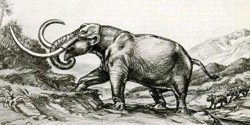 Kayseride 7,5 milyon yıllık fil fosili tek parça olarak bulundu