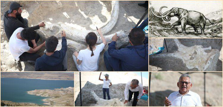 Kayseri'de tek parça halinde bulunan Choerolophodon fosili tanıtıldı