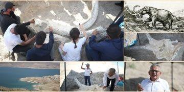 Kayseride tek parça halinde bulunan Choerolophodon fosili tanıtıldı