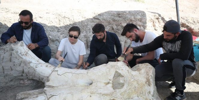 Kayseride bulunan Choerolophodon türü tarih öncesi fil fosili