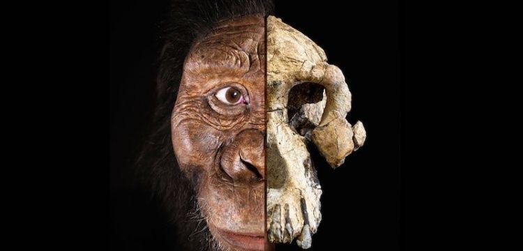 Australopithecus Anamensis kafatası insanımsı türleri tartışmaya açtı